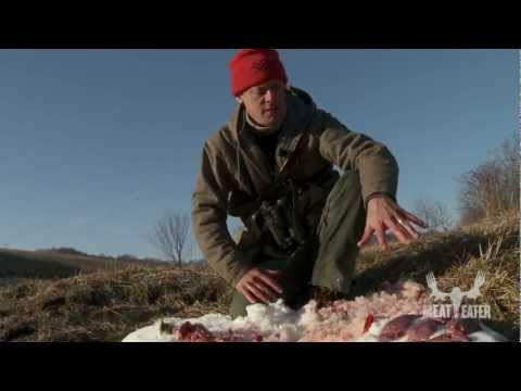 How to Skin and Clean a Rabbit --Steven Rinella