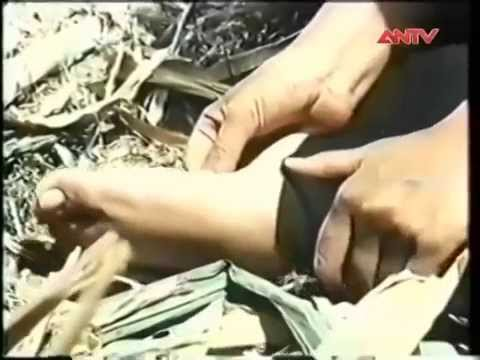 Trích đoạn phim Xương Rồng Đen ( Việt Trinh, Võ Thế Vỹ)