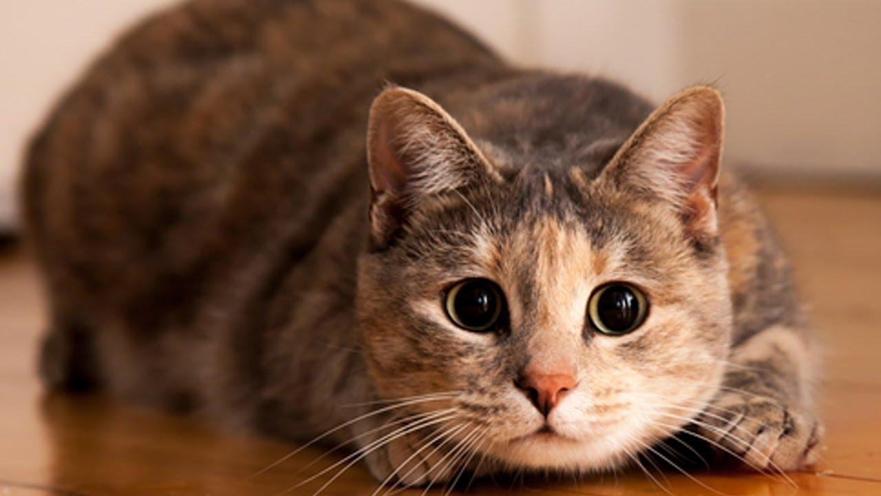 Compilation de sauts de chats