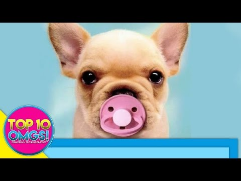 Top 10 Cutest Baby Animals Ever