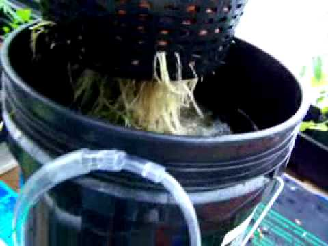 Easiest Dwc Hydroponic System Youtube