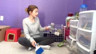 How To Litter Train Your Rabbit Rabbit Care / Holland