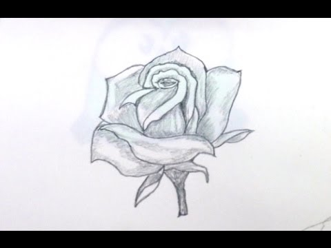 How to draw rose step by step for beginners youtube for Easy to draw roses for beginners