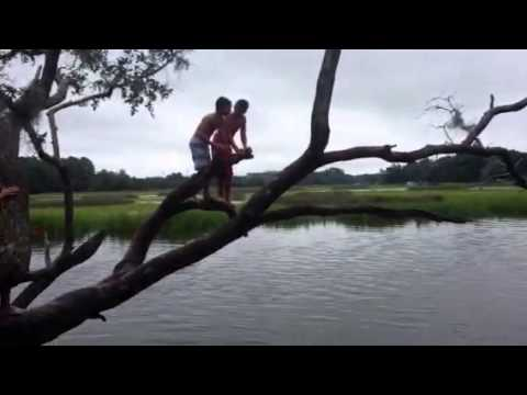 Bellinger Island tree jumping