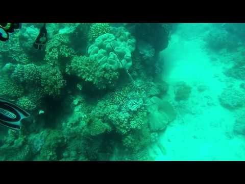 Scuba Diving Great Barrier Reef
