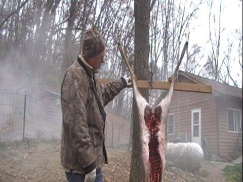 Skinning butchering to freezer large game processing deer