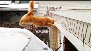 חתול שלא מצליח לקפוץ