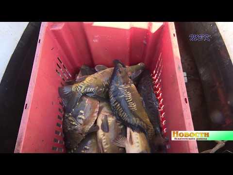 Рыбный водоем создал предприниматель в Искитимском районе