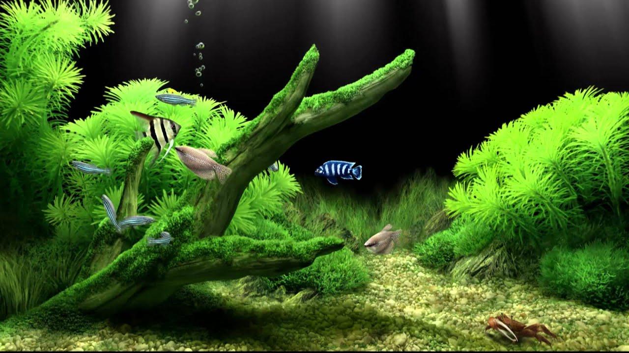 Dream Aquarium Virtual Fishtank 2 Youtube