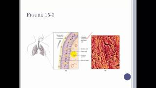 Chapter 15 The Respiratory system Part 1