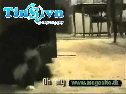 TinS.vn - Những hình ảnh vui nhộn về động vật