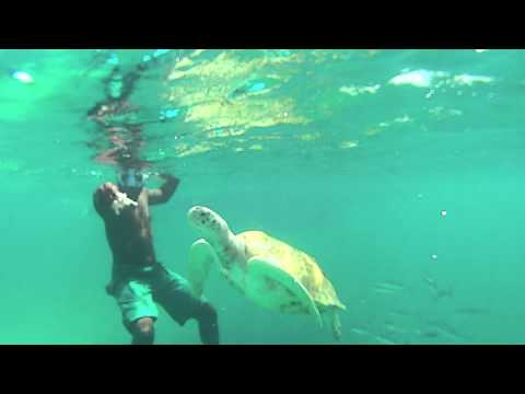 Swimming with Turtles / Barbados / Good Times Catamaran Tour
