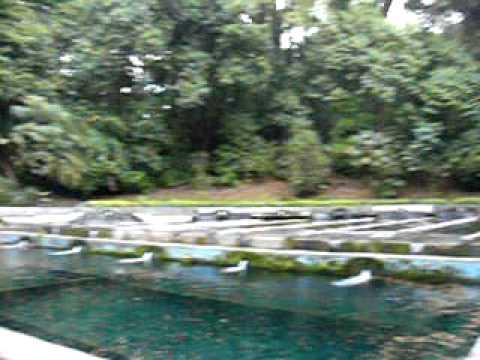 Criadero de truchas en michoacan youtube for Criaderos de pescados colombia