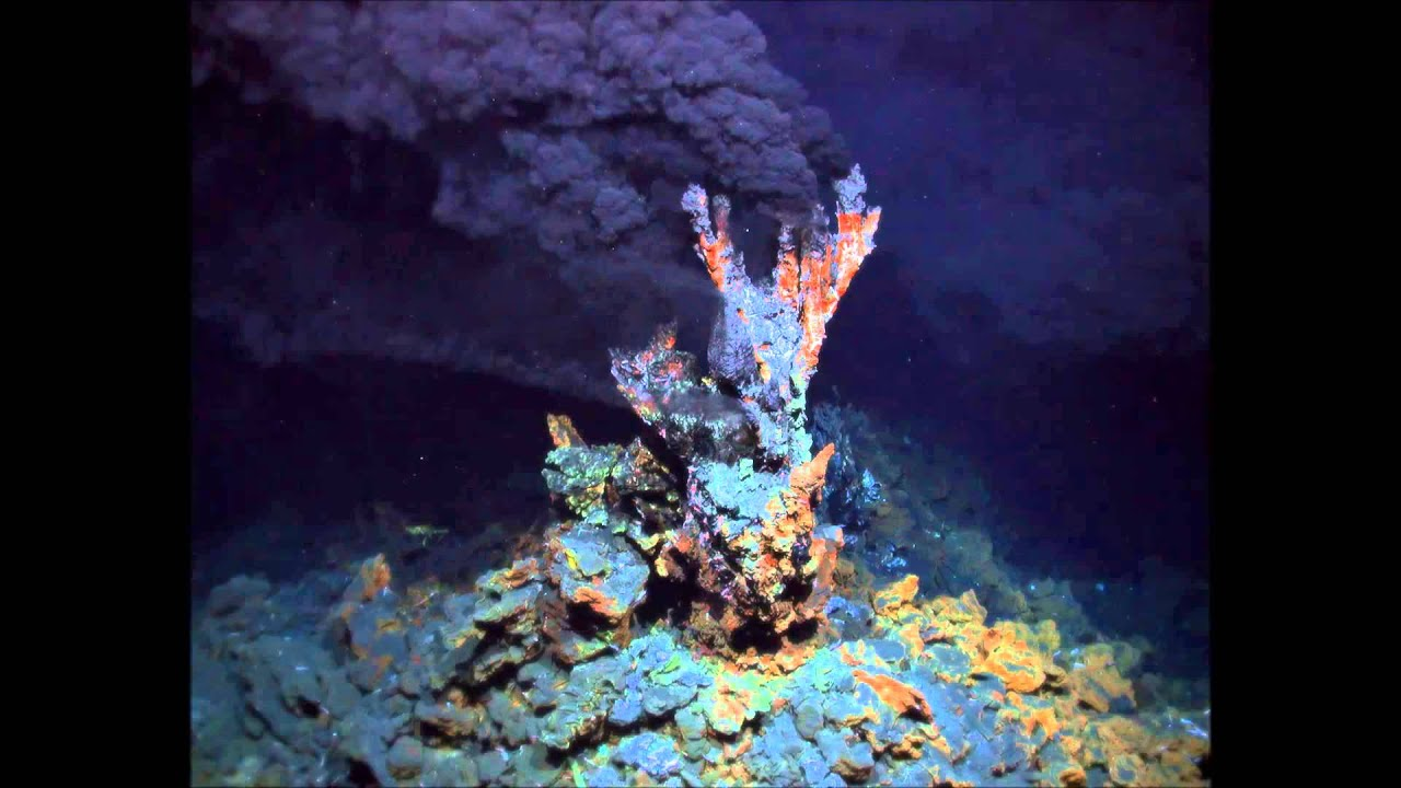 an analysis of the ecosystems in hydrothermal vents In addition to their extraordinary ecosystems, deep-sea hydrothermal vents are characterized by an abundance of metal sulphides that precipitate out from the black.