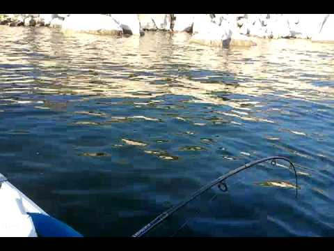 Striper fishing at san luis reservoir youtube for San luis reservoir fishing
