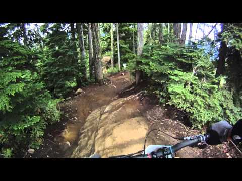 Whistler downhill, bear on MTB trail