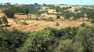 ኢትዮጵያን እንደገና አረንጓዴ ለማድረግ የሚደረገው ጥረት - Regreening Ethiopia
