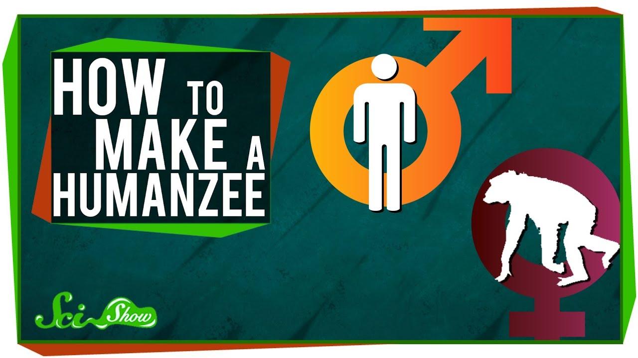 Humanzee Oliver How to make a humanzee Yerkes Humanzee