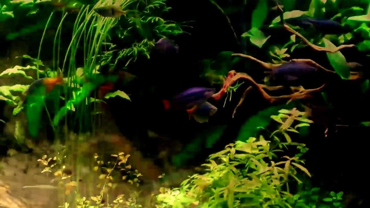 Fish aquarium on youtube ornament fish aquarium youtube for Youtube fish tank