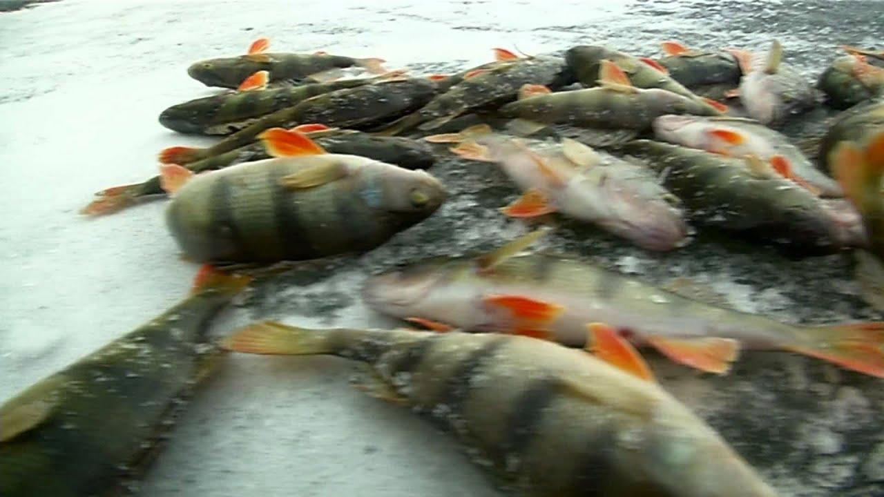 узбельск рыбалка