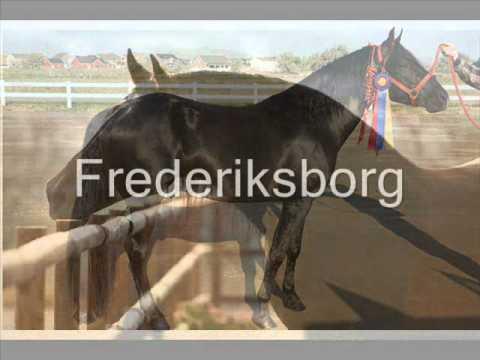 caballos nombre y raza