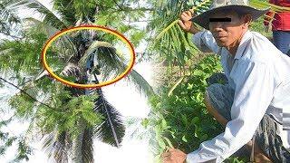 Lạ kỳ Người đàn ông sống trên cây dừa suốt 3 năm không chịu xuống đất - TIN TỨC 24H TV
