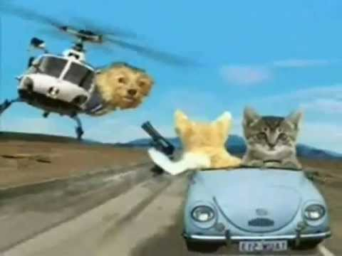 Happy Birthday, Funny Cats Style!  #2 - On the Move
