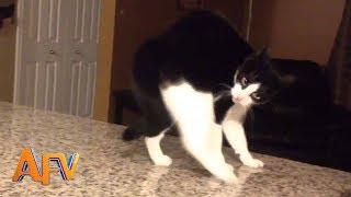 Superpodivné mačky
