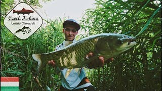 [HD] Czech Fishing: Grass Carp with Common Reed (Lov amurů pomocí rákosu)