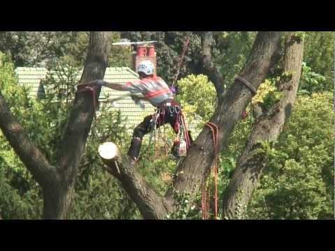 Kramer Tree Specialists Tree Removal
