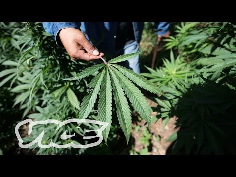 Will Mexico Ever Legalize Weed?