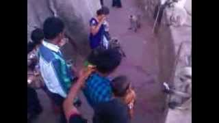 Animals Monkey Comedy Video Download Free Zoo Animal Full