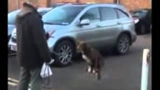 Cachorro equilibrista