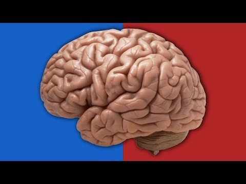Do Your Genes Determine Your Political Beliefs?