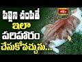 పిల్లిని చంపితే ఇలా పరిహారం చేసుకోవచ్చును.. || Dharma Sandehalu || Bhakthi TV