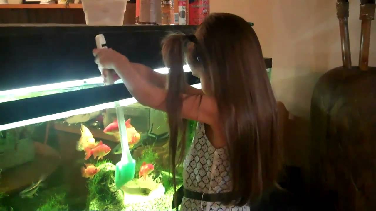 How to clean a fish tank aquarium remove algae fish for How to clean a fish tank
