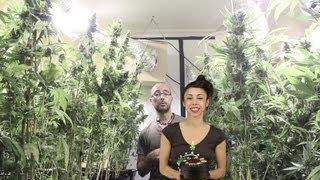 Marihuana Television News 13