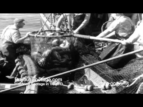 HD Stock Footage Salmon Fishing Jackpot 1954 Newsreel