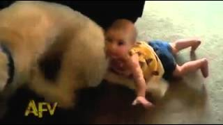 Funny Baby Videos Compilation – will definitely make you smile