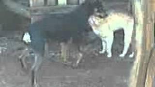 Lupi.comendo.gato.3gp view on youtube.com tube online.