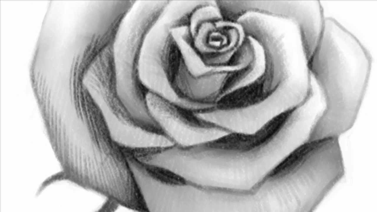 Rose Drawings