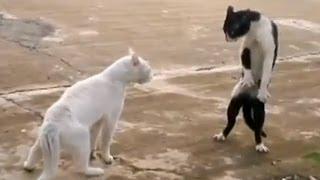 Recopilación de gatos divertidos