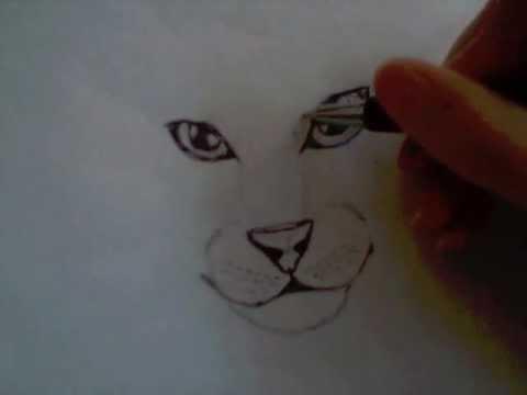 Hoe Teken Je Een Kat Deel 1 Youtube
