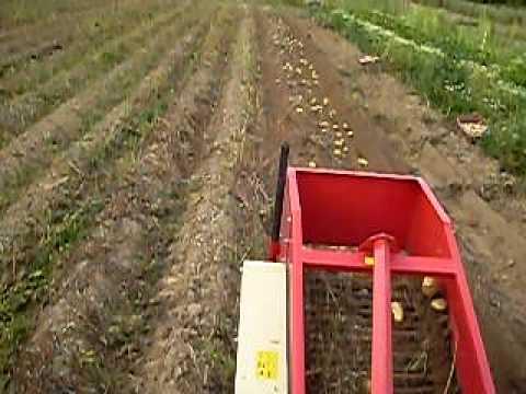 Recolteuse de pomme de terre
