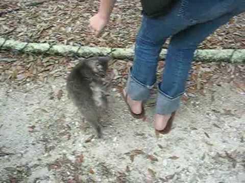 Jenny & Tyler - Spring 09' Tour Update #4 (Jenny loves cats and cats love Jenny)