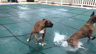Cachorro brincando na piscina