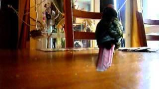 Pépite : Comment Fabriquer Un Jouet Avec Son Perroquet