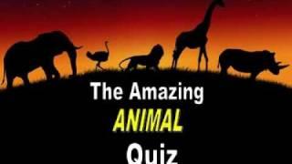 Amazing Animal Quiz.