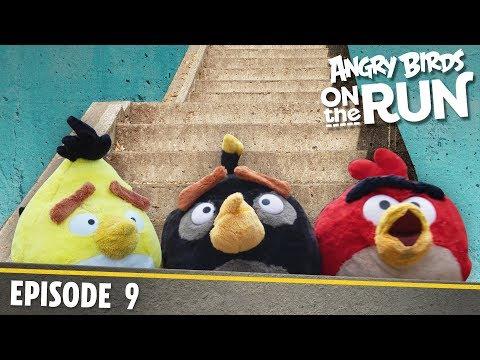 Angry Birds - Na útěku - 9 - Schody