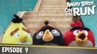 Angry Birds - Na úteku - 9 - Schody